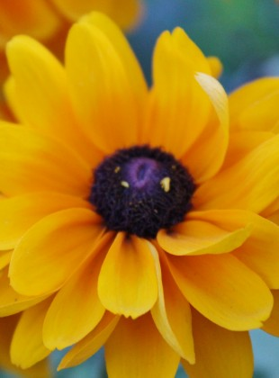 fleurs jardin christiane bailey (1400x1017)